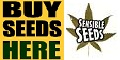 Sensible Seeds - Cannabis, Marijuana